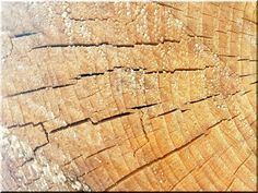 Gerenda bütü falburkolat - Antik bútor, egyedi natúr fa és loft designbútor, kerti fa termékek, akácfa oszlop, akác rönk, deszka, palló Texture, Wood, Vintage, Surface Finish, Woodwind Instrument, Timber Wood, Trees, Vintage Comics, Pattern