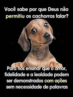 - Welcome to our website, We hope you are satisfied with the content we offer. - – Welcome to our website, We hope you are satisfied with the content we offer. If there is a pr - Funny Animal Memes, Animal Quotes, Love Pet, My Love, Memes Status, Lettering Tutorial, Love Words, Pet Shop, Animals And Pets