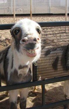 Und dieser Esel | 17 Tiere, die Gras unbedingt legalisieren wollen