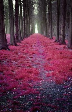 Imagine walking down this road.