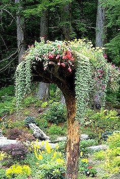 Planter on top of tree stump