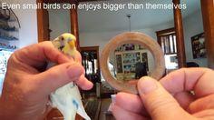 Monk Parakeet, Parakeets, Small Birds, Camera Phone, Rings For Men, Board, Men Rings, Parakeet, Little Birds