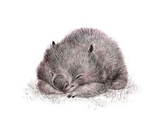 A little pencil sketch for wombat wednesday