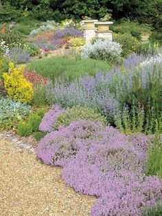 Dry garden with drought tolerant ground cover low maintenance plants thymes nepeta helianthemums summer flower July. Dry Garden, Gravel Garden, Garden Urns, Garden Plants, Landscape Design, Garden Design, Drought Tolerant Garden, Ground Cover Plants, Front Yard Landscaping