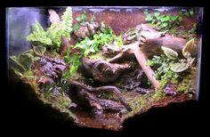 Rapture tank - My First Vivarium Lizard Habitat, Reptile Habitat, Reptile Room, Reptile Cage, Terrariums, Gecko Terrarium, Reptile Terrarium, Tarantula Enclosure, Reptile Enclosure
