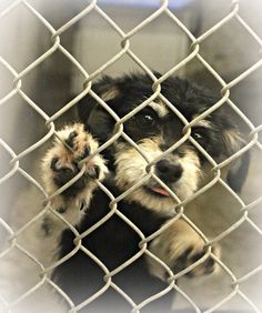 SAFE.   7-9-14: CUTENESS ALERT! Look at this little baby! How is she being passed up at the shelter? She's a Terrier Mix, less than 1 yr old. This is a kill shelter so she needs out w/ a foster parent or adopter ASAP. How can you resist? She'd love to be part of your family! Kennel A20. Only $51 to adopt! Foster for FREE! Odessa TX. https://www.facebook.com/speakingupforthosewhocant/photos/a.573572332667009.1073741829.248355401855372/805069899517250/?type=1theater