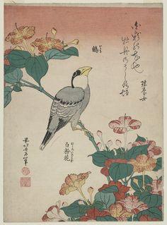 Hawfinch and Marvel-of-Peru, by Katsushika Hokusai