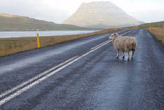 Iceland, Along the road, Snæfellsnes Peninsula