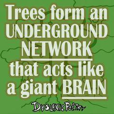 Are trees intelligent? Simple Minds, Make Sense, Illusions, Acting, Trees, Sayings, Lyrics, Tree Structure, Optical Illusions