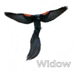 Jackson Widowbird Blush