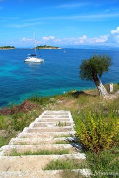 Beautiful nature at Klis beach, Paxos island Ionian sea, Greece Paxos Island, Greek Flowers, Forest Mountain, Greece Islands, Tree Forest, Flowering Trees, Greece Travel, Plan Your Trip, Vacation Spots