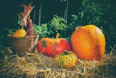 Pumpkin, Vegetables, Food, Buttercup Squash, Pumpkins, Veggies, Essen, Veggie Food, Vegetable Recipes