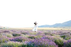 Lavender Fields in Mona, Utah