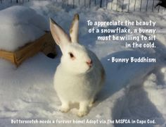 Book Pre-Order Offer   Bunny Buddhism