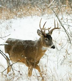 *Late-Season Deer Hunting Tactics*  In order to be successful you have to remember the late season basics and cautiously stick to them. #CelebrateTheHunt