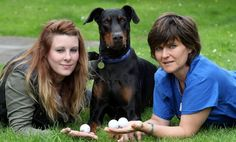 He must be feeling under par! Dog needs emergency surgery after swallowing three GOLF balls