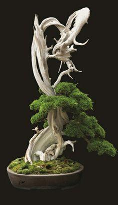 A bonsai of a cypress.