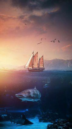 Shark World IPhone Wallpaper - IPhone Wallpapers