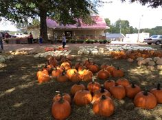 Saturday 10/1/16 ~ Spent this first day of my favorite month in one of my favorite ways---loafing with my husband. Had lunch with Carol & Gene at the Smoking Grill in Springville and went to Williams Orchard in Argo. Home to watch Alabama game on TV and to see them win again