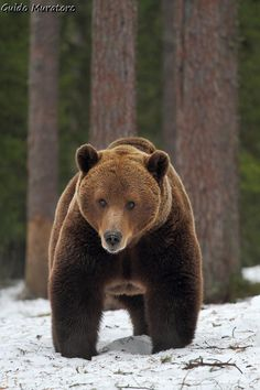 Teddy bear by Guido Muratore on 500px