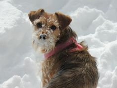 Our snow digging pup!