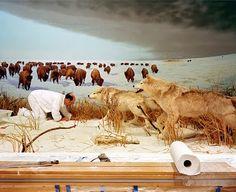 Richard Barnes painting a wildlife wall mural