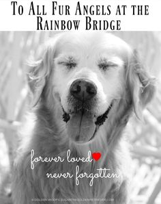 Remembrance Day Rainbow Bridge To All Fur Angels at the Rainbow Bridge: forever loved and never forgotten