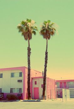 pink and aqua with palm trees. #devineinspiration #devinecolor #palette