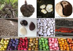 The amazing tagua nut!
