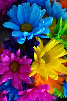 Flores Discover Colors Splash Close up of them Flowers Nature, My Flower, Colorful Flowers, Flower Art, Beautiful Flowers, Flower Phone Wallpaper, Cellphone Wallpaper, Iphone Wallpaper, Cute Wallpapers