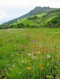 Gorongosa Mountain Meadow by gorongosa, via Flickr