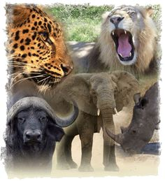 Photo collage of the Big Five: leopard, lion, buffalo, elephant, rhino