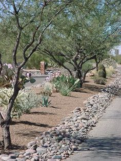 Hot Desert Landscaping - Commercial Work