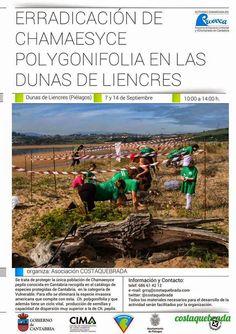 #Voluntariado para la erradicación de Chamaesyce polygonifolia en el Puntal de #Liencres, #Cantabria