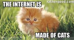 Why Cats Rule the Internet Instead of Dogs