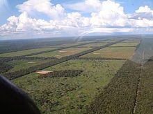 Paraguay - Avance de la deforestación en el Chaco Paraguayo, solo en 2008 se deforestaron 220.000 hectáreas91