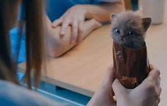 gâteaux chats - Recherche Google
