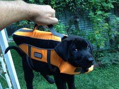 Este pequeno camarada que não sabe bem se está pronto para um mergulho.
