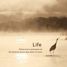 Crane in Lake