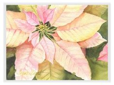 Poinsettia Watercolor Greeting Cards - Susie Short's Gift Gallery
