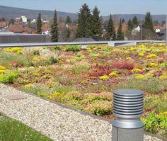 Zelená střecha administrativní budovy Houses, Homes, Home, At Home