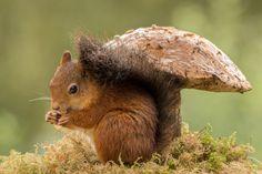 squirrel standing on moss under a mushroom
