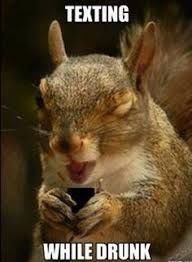 Image result for funny squirrel memes