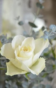 Rose bushes, you will find them where I have been. Little crumbles left behind for my Hansel & Gretal. The note that I have from my mother. Something she left with a trusted person. I will find you mom.