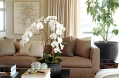 Camel colored couch, decorated with throw pillows one shade lighter than the walls, one shade darker than the couch, and every shade and texture in between.