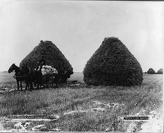Wheat stacks & wagon load of grain, Portage La Prairie, MB, 1887 ==vintage everyday: Old Photographs of Canada from Dominion Day, Happy Canada Day, Fur Trade, Canadian History, O Canada, Marquise, Old West, Vintage Photographs, Westerns