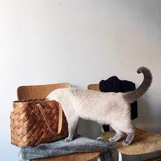 #Meow #Bag