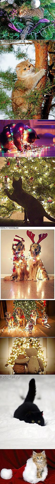 Дед Мороз: Новогодние коты | Постила.ru