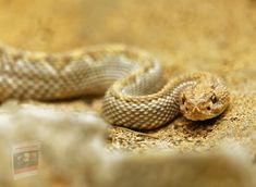 Classic Snake Game, Rattlesnake Bites, Snake Images, Milk Snake, Boa Constrictor, Snake Venom, Anaconda, Dog Feeding, Orthodontics