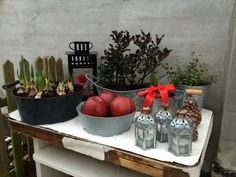Et lille dekoreret bord til vinterhaven med lågplanter, lanterne, æbler og andre grønne planter.